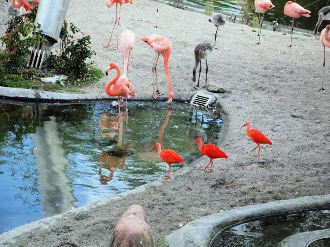 København zoo indgangen escort piger nordjylland