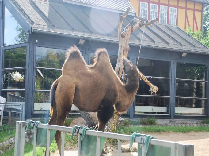 København zoo indgangen Thaimassage Vestjylland