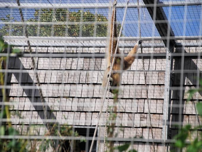 medfølgende løn København zoo indgangen